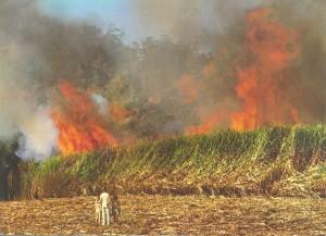 a widok bushfire