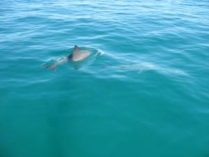 Z portu Fremantl wyprowadza mnie nasz morski brat